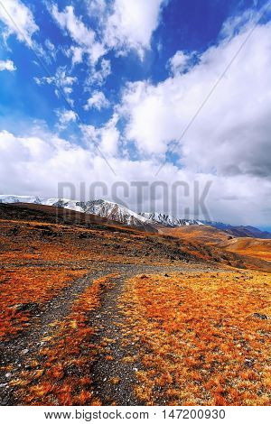 Mountain desert with orange-yellow dry grass on a background of mountains under a sky with white clouds. (Ukok plateau Altai Siberia Russia)