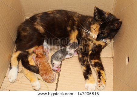 Cat with tiny kittens in a box