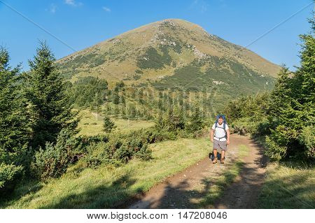 Bearded tourist in a white shirt with a backpack on his back walks in the woods descending from mount