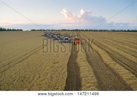 KRASNODAR REGION, RUSSIA - JUL 6, 2015: Modern harvesters harvest wheat field, In 2015 in Krasnodar region have collected record grain harvest - 102 million tons of grain