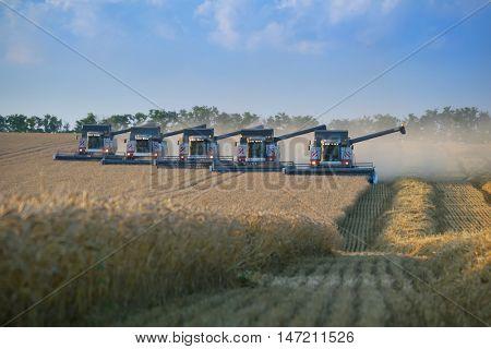 KRASNODAR REGION, RUSSIA - JUL 6, 2015: Modern harvesters harvest field, In 2015 in Krasnodar region have collected record grain harvest - 102 million tons of grain