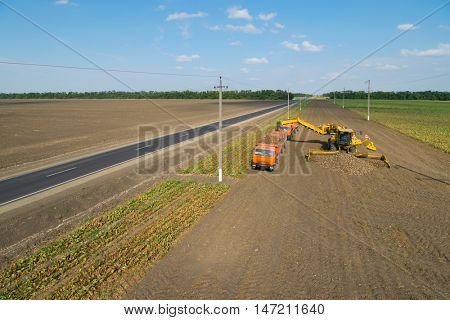 KRASNODAR REGION, RUSSIA - AUG 19, 2015: Machine loads of sugar beet into truck, In 2015 in Krasnodar region have collected record grain harvest - 102 million tons of grain