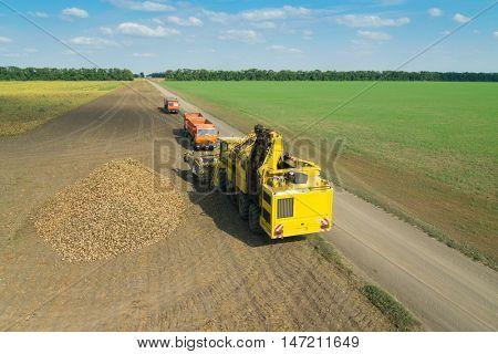 KRASNODAR REGION, RUSSIA - AUG 19, 2015: Yellow harvester, sugar beet heap, trucksp at field, In 2015 in Krasnodar region yields reached record level - 58.4 centners per hectare
