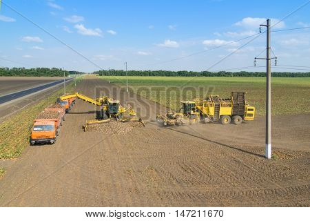 KRASNODAR REGION, RUSSIA - AUG 19, 2015: Machine loads of sugar beet into  truck and harvester arrives, In 2015 in Krasnodar region have collected record grain harvest - 102 million tons of grain