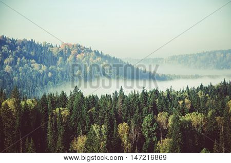thick fog covered with thick coniferous forest. forest with a bird's eye view . coniferous trees, thickets of green forest. fog covered with thick coniferous forest.