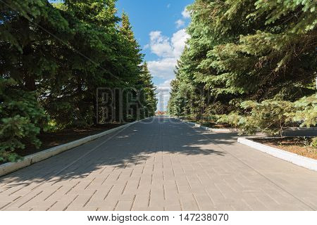 coniferous alley with road from a stone blocks in the city park