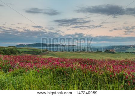 Tuscany Landscape. Morning in Tuscany, Val d'Orcia, Italy