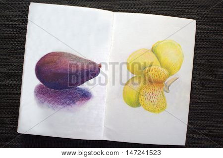 Sketchbook spread with avocado and iris drawing. Hand-drawn tropical flower and exotic fruit. White paper and colorful pastel pencils. Asian travel sketches. Image of black table with colored album