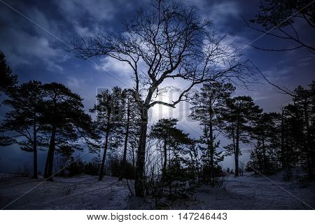 Mystical night landscape of winter forest with terrible tree at the centre. Moonlight, winter time, cold tone.