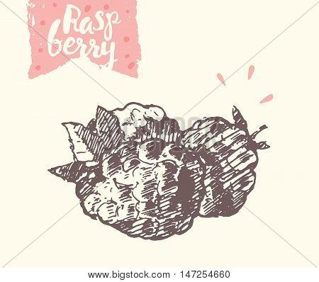 Hand drawn raspberry, vector illustration, sketch draw