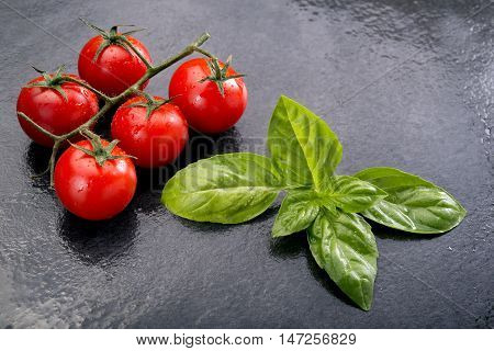 Basil And Ripe Of Cherry Tomatoes