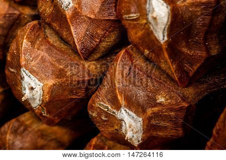 Closeup of brown pine cone scales background