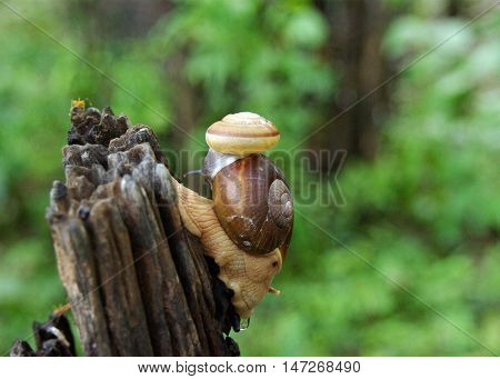 Small nail gliding on big snail in the garden.