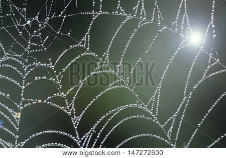 spider web and lens flare