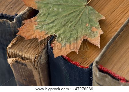 Different vintage antiquarian tattered books with dry leaf close up. Selective focus