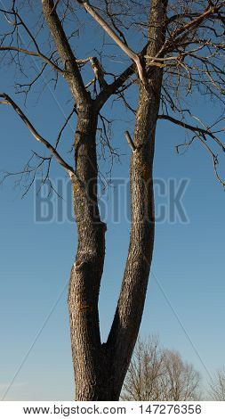 vertical panoramic photo tree trunk against the blue sky
