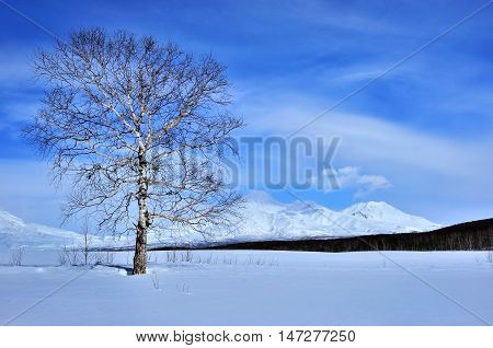 Winter landscape with tree volcano and blue sky