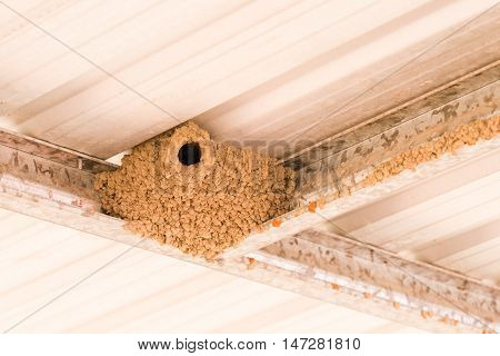 Mud nest of a white breasted woodswallow in an outdoor carport