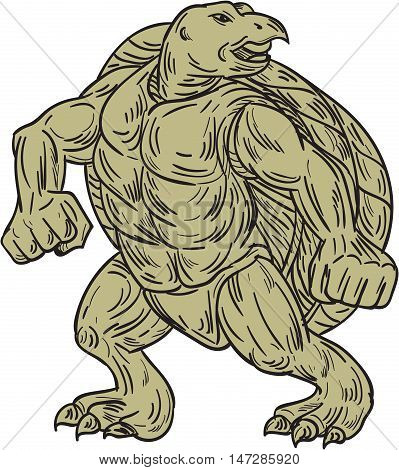 Drawing sketch style illustration of a Kemp's ridley sea turtle or Lepidochelys kempii in a martial arts stance viewed from front set on isolated white background.