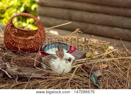 Rabbit Or Hare With Milk On Straw