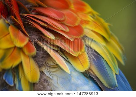 Bird feathers. Plumage of Macaw. Colourful rainbow feather background.