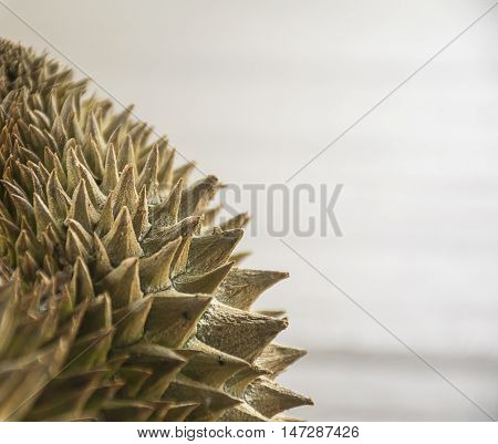 close up durian with clean background. thorny of fruit.