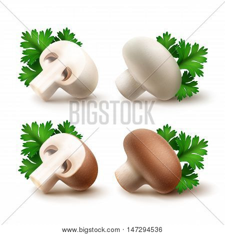 Vector Set of Fresh Whole and Sliced Half White Brown Portabello Agaricus  Champignons Mushrooms with Green Parsley Leaves Close up Isolated on White Background