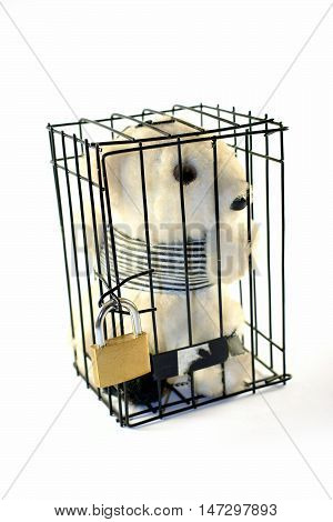 Teddy bear in a prison cell. Locked door. Isolated in white background.