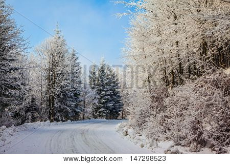 Ski trail runs along the road in the snowy forest. Bright Christmas morning