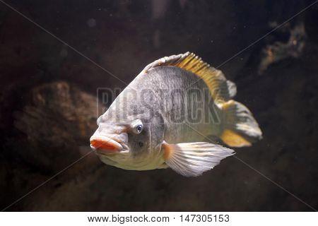 Big fish in the deep water