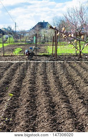 Plowed Garden Seed Beds And Tiller In Village