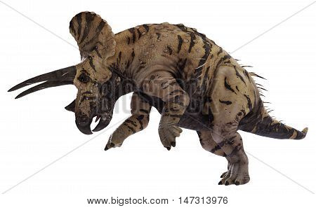 3D rendering of Triceratops horridus ramming, isolated on white background.