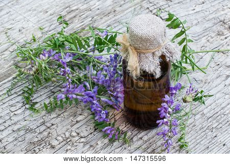 Medicinal plant Vicia cracca (tufted vetch cow vetch bird vetch blue vetch boreal vetch) and pharmaceutical bottle. It is used in herbal medicine livestock feed good honey plant