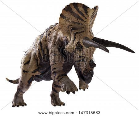 3D rendering of Triceratops horridus charging, isolated on white background.