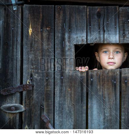 Little girl peeking through a gap in a wooden rustic barn.