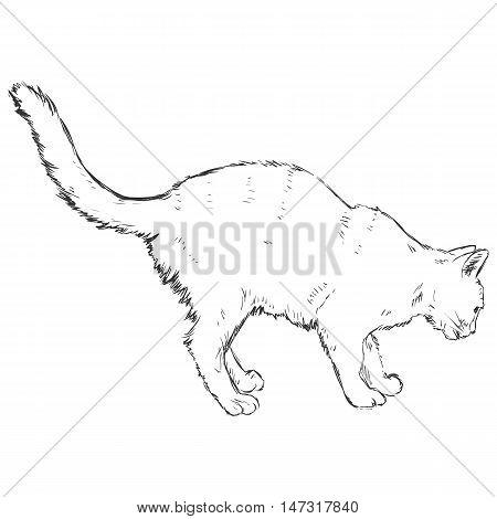 Vector Sketch Cat