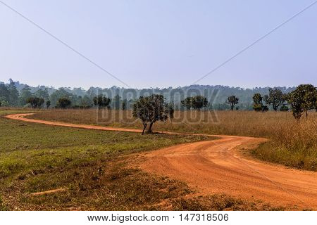 S-curve dirt road in savanna forest with clear sky