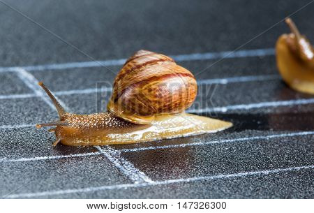 Snails on the athletic track approaching the finish line