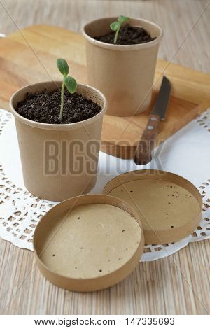 paper cups with seedlings on the table