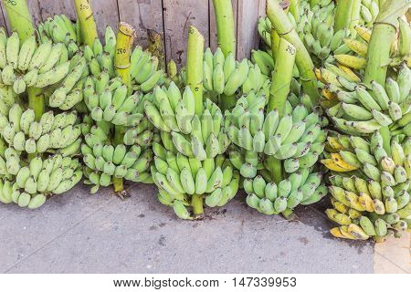 Lots of bunches of bananas selling at local market Northeast of Thailand