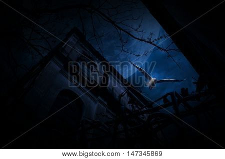 Seagull bird fly over old fence grunge castle dead tree moon and cloudy sky Spooky background Halloween concept