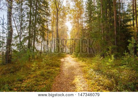 Path, lane, way, pathway in wild autumn forest.