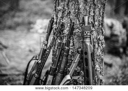 Soviet And German Rifles Of World War II Machine-gun Leaning Against Trunk Of Pine