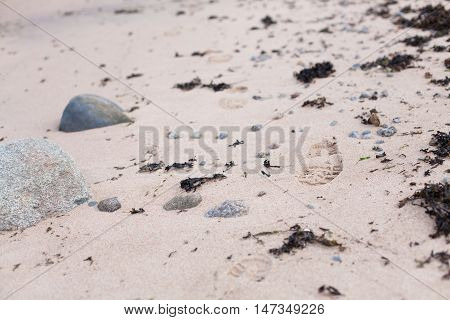 Footprints from boots in the sand on a rocky beach with seaweeds