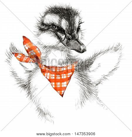 Cute duckling T-shirt graphics. duckling pencil sketch. Cute animal illustration for fashion print, poster for textiles, fashion design
