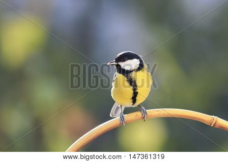 bird with a yellow breast perched on a branch in Sunny day