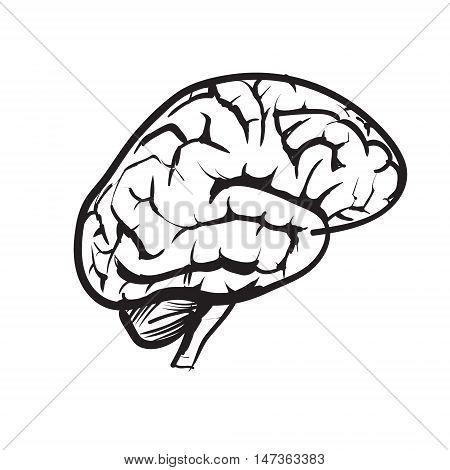 vector icon brain creativity, black, illustration, idea