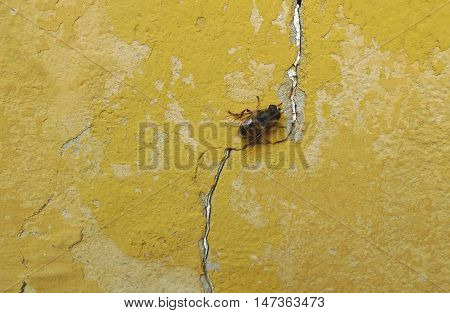 Bee on an old yellow rusty wall