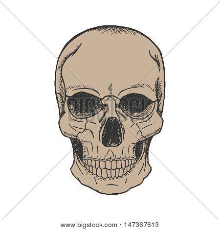 Vector hand drawn human skull sketch style.