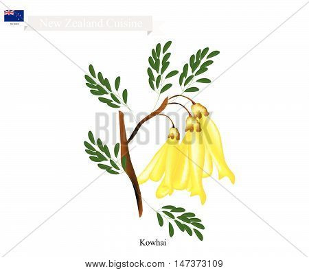 New Zealand Flower Illustration of Kowhai Flowers. The National Flower of New Zealand.